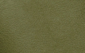 Sequoia 4017